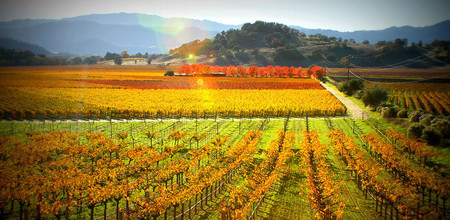 Napa Valley Wine Region